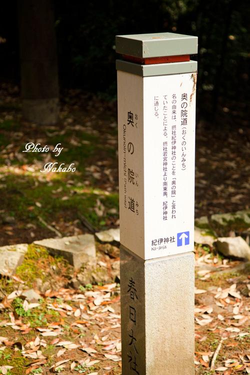 Nara54.jpg
