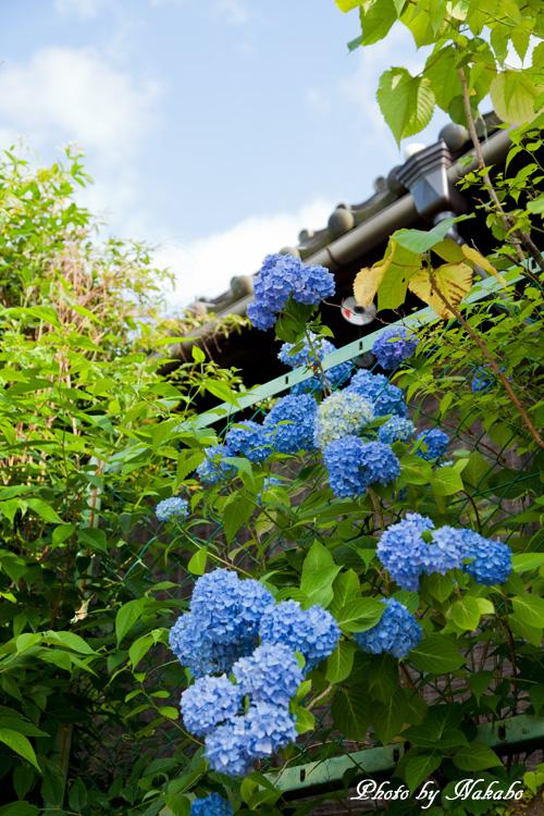 Nara58.jpg