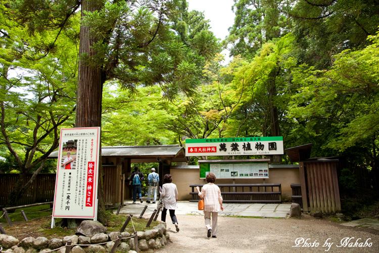 Nara60.jpg