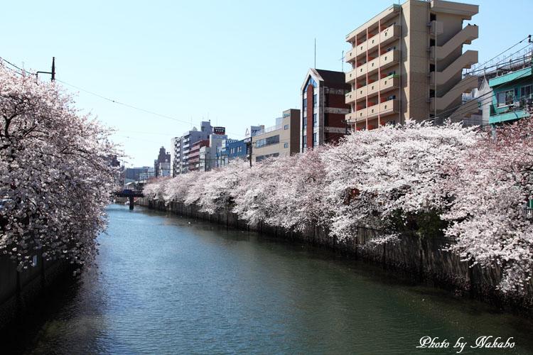 Oookagawa1.jpg
