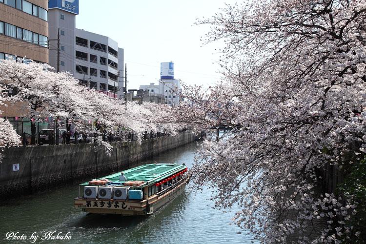 Oookagawa13.jpg