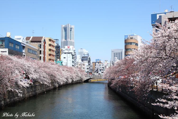 Oookagawa2.jpg