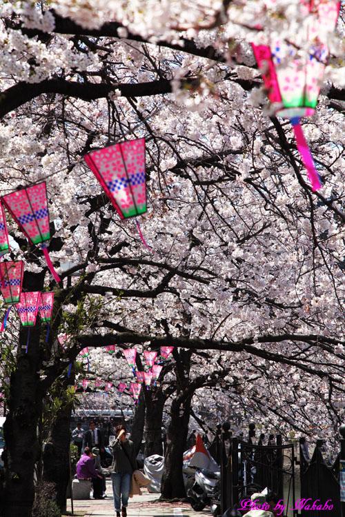 Oookagawa5.jpg
