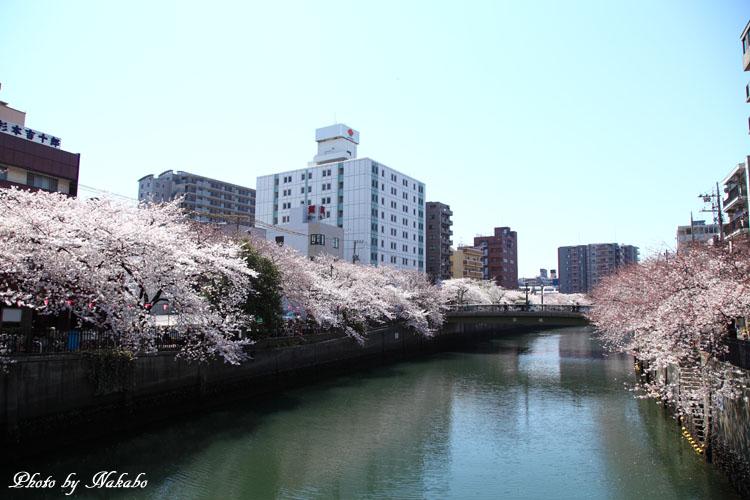 Oookagawa6.jpg