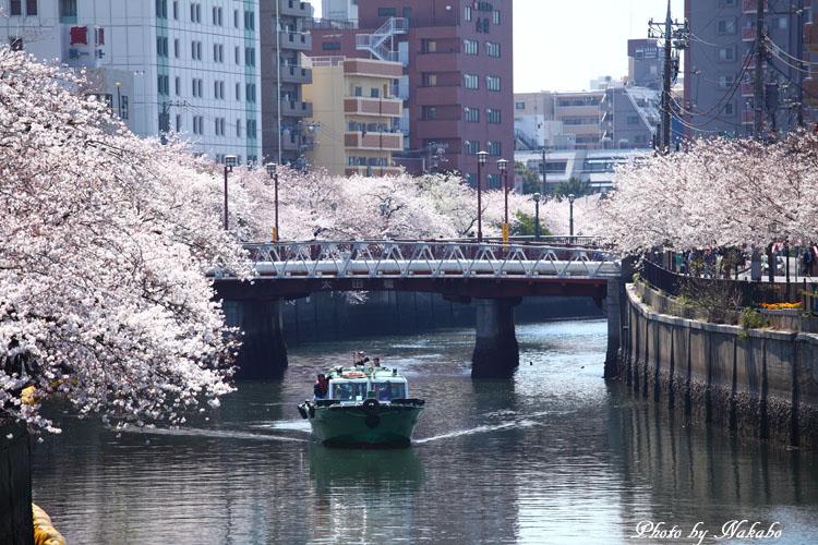 Oookagawa9.jpg