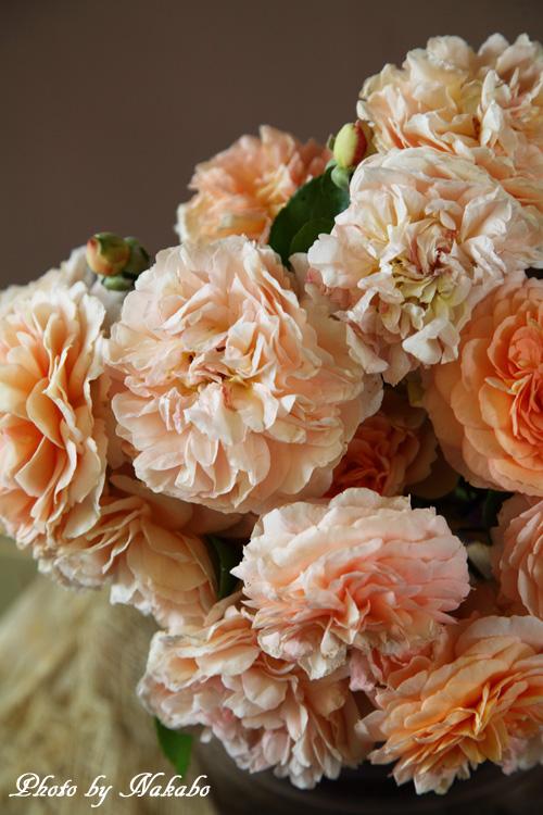 Yamate-Flower30.jpg