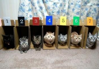 image_2_RE_How_to_store_and_organize_cats-s400x280-42086.jpg