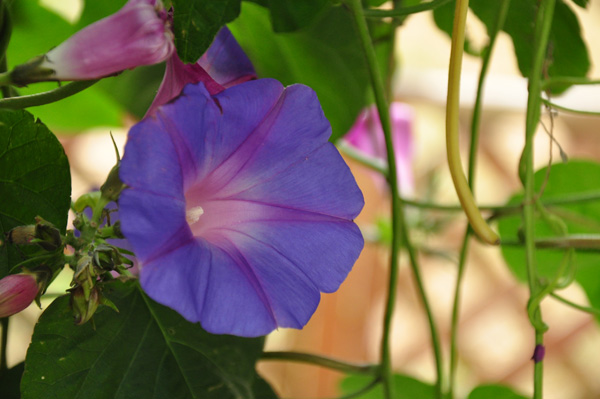 flower01.jpg