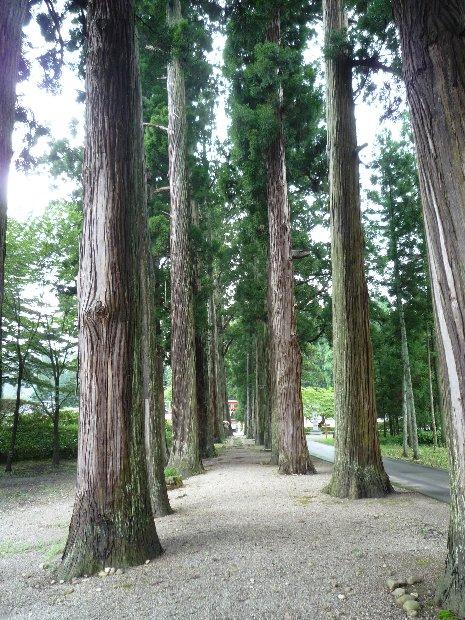 100816杉並木