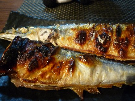 100926秋刀魚
