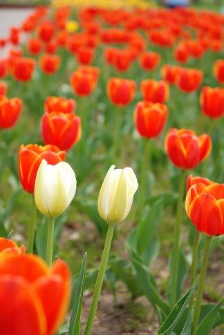 flower12-25.jpg