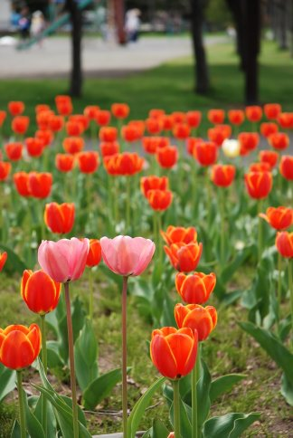 flower12-26.jpg