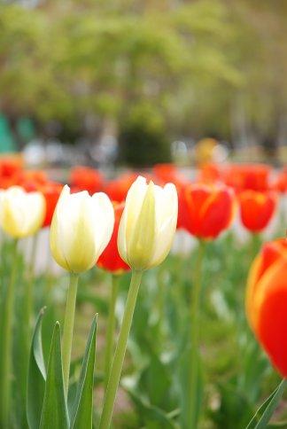 flower12-27.jpg