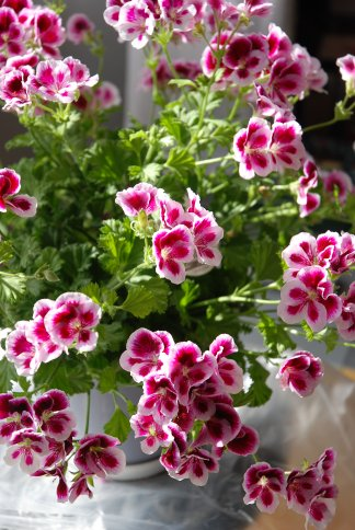 flower12-29.jpg