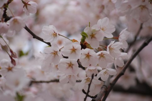 fuwari12-1.jpg