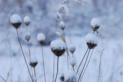 snow10-3.jpg