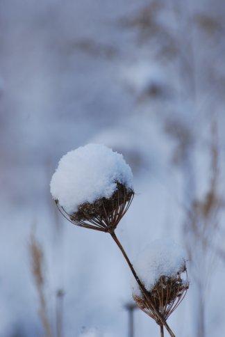 snow10-4.jpg