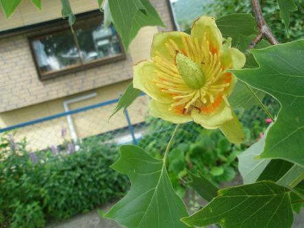 ウチの前のお花