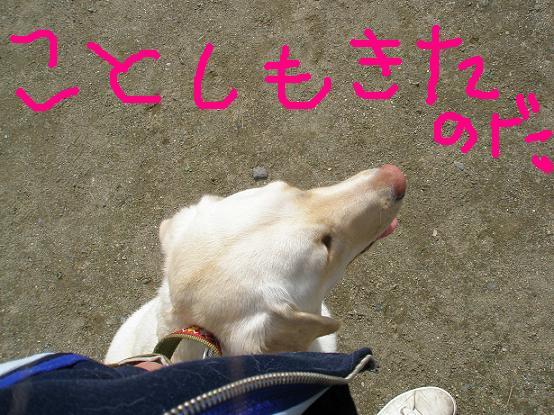 PA042746.jpg