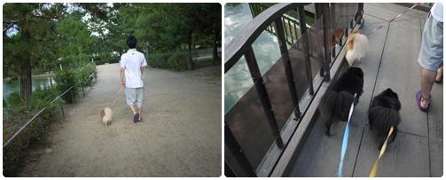 弁天池公園2