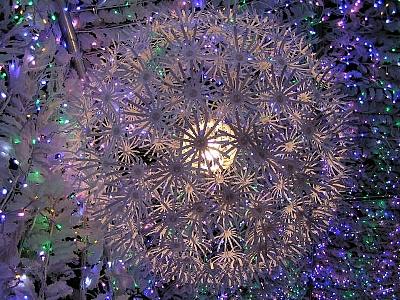 2010クリスマスイルミ006