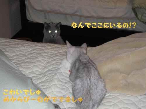 020_convert_20101116230729.jpg