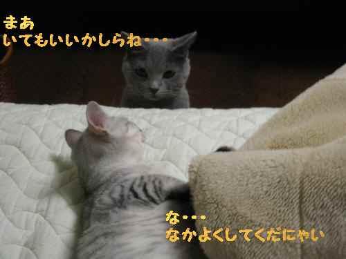 021_convert_20101116202339.jpg