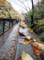 高津戸峡3