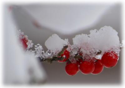 雪の朝2月2日