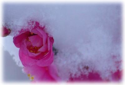 雪の朝2月2日梅