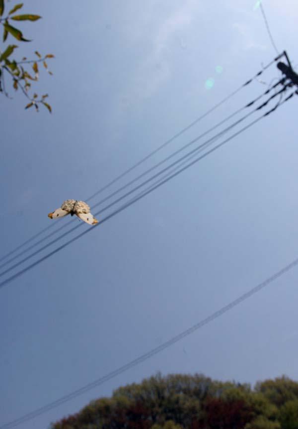 ツマキ飛翔1