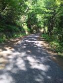 山道下り1