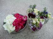 5月庭の花