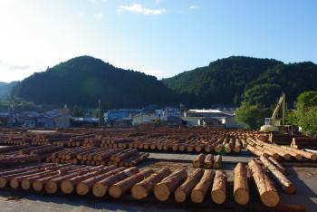材木置き場_1