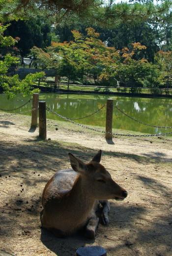 鏡池の鹿_1