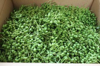 箱いっぱいの実山椒
