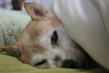 昼寝中デス