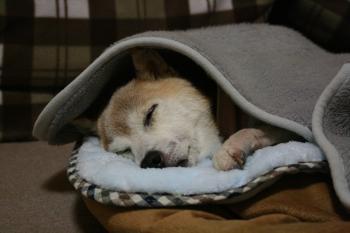 おやすみなさーい