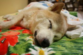 横転疲れでおやすみ~