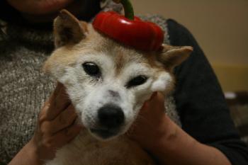赤いベレー帽も良い感じ♪