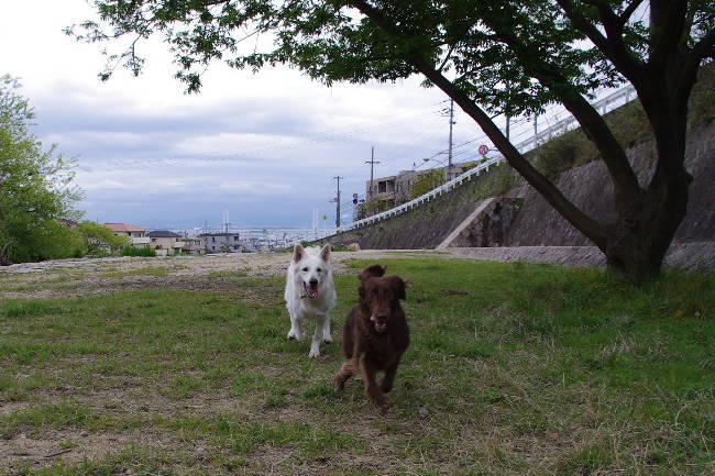 コピー ~ IMGP9217(2)