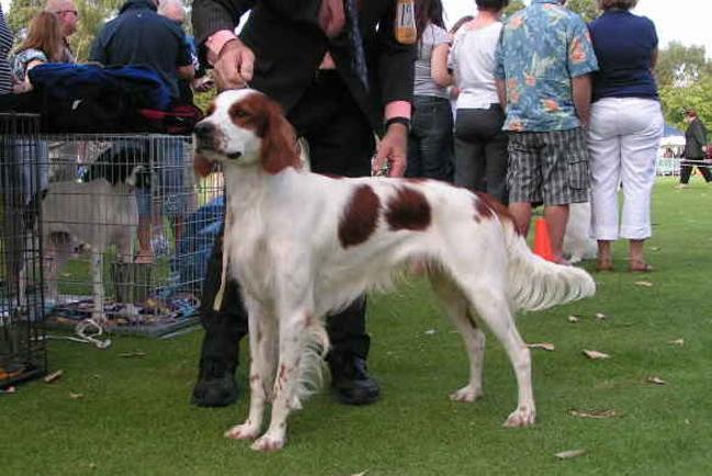 Dog show (12)a