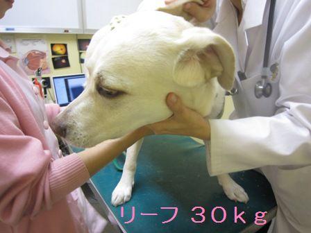 20100518006.jpg