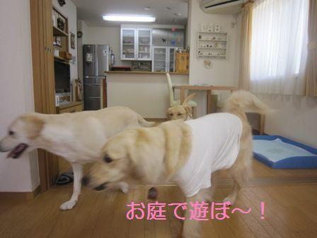 20100531002.jpg