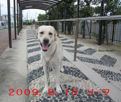 20100815002.jpg