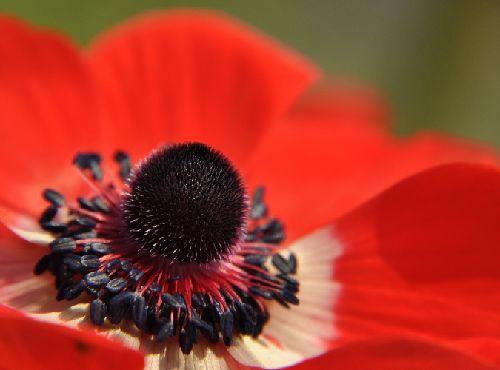 anemone0379b.jpg