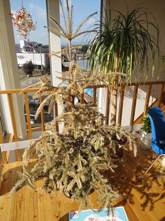 IKEAクリスマスツリー終了1
