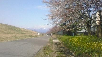 2009年4月2日の桜