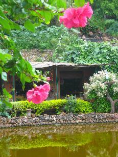 pinkhibisucus.jpg