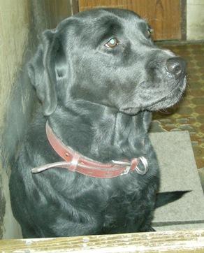 DSCN1308 黒犬「ろく」